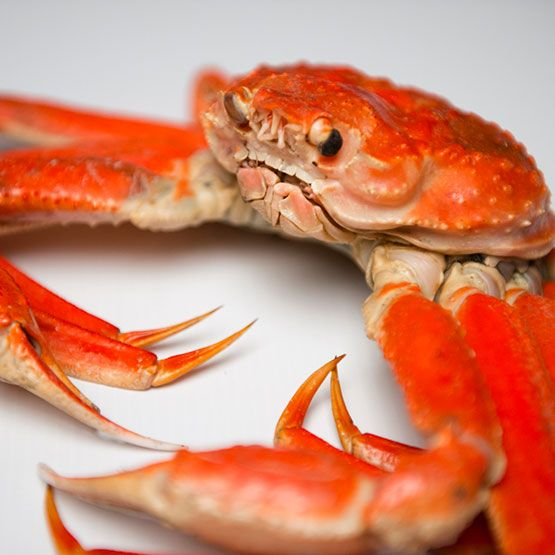 Le crabe des neiges du Québec