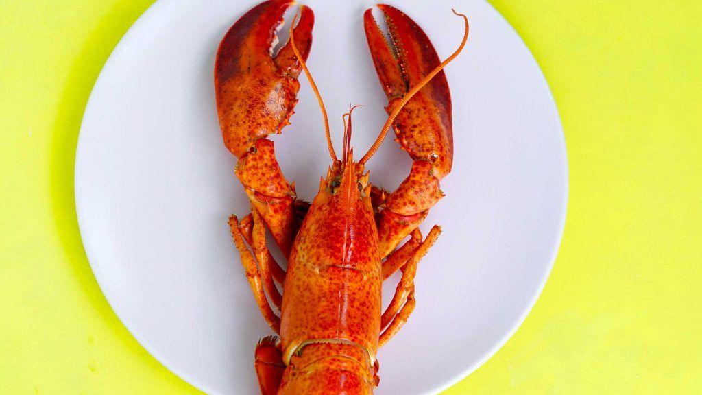 Guide de cuisson et d'achat du homard
